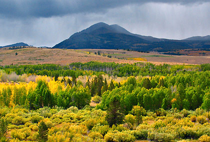a small forest in fall colors near Bodie with the Sierra Nevada mountains in the background as viewed from the 395