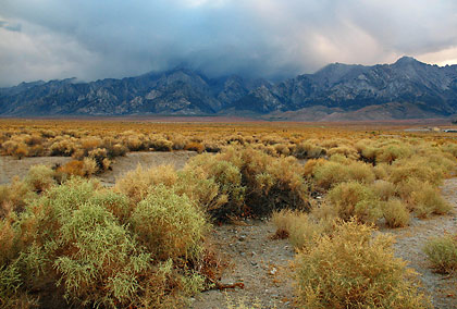 sagebrush on the valley floor near Lone Pine