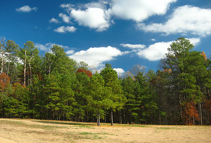 a forest of trees covers a former battleground at Petersburg National Battlefield Park
