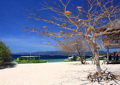Talisay tree on Banana Island's stretch of powdery white sand