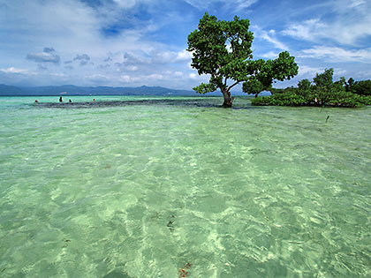 mangrove trees and the Yang-in Sandbar at high tide