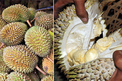 durian: exterior and interior views