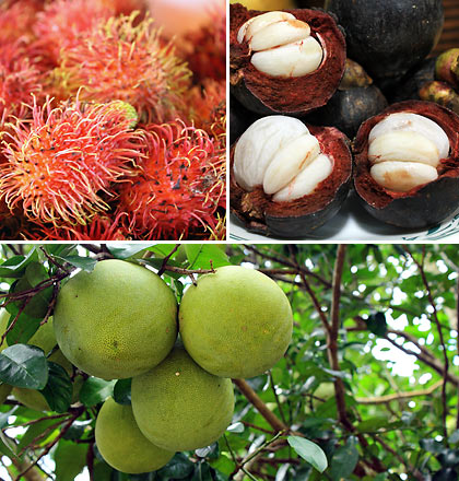 pomelo, rambutan and mangosteen