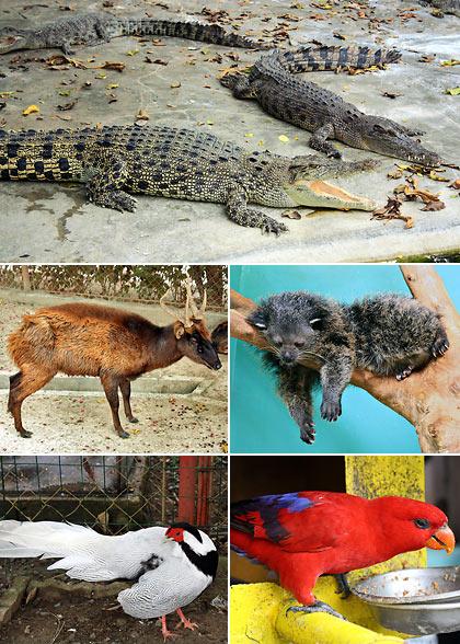 animals at the Davao Crocodile Park