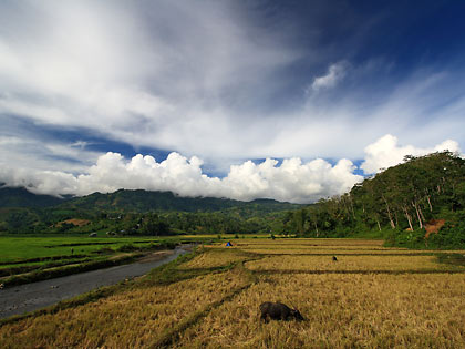 rice fields and hills as seen on the road going to T'daan Kini Falls