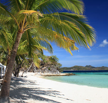 coconut palms at Malcapuya's southern beach
