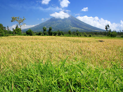 Mayon volcano shrouded by clouds with rice field in the background