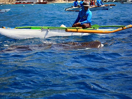hand-paddled boat with whale shark
