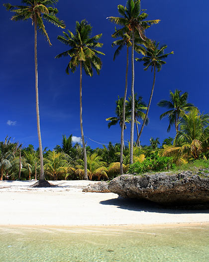 coconut palms and coral rock on Paliton Beach
