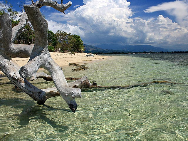 driftwood and crystal-clear waters, Potipot Island, Zambales