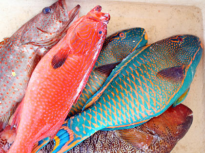 groupers and parrot fish at Tignoan's seafood market, Real