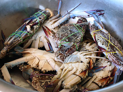 blue crabs at Tignoan's seafood market