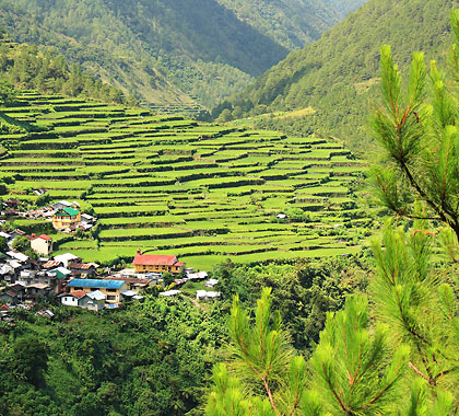 Bay-yo rice terraces near Bontoc on the road to Sagada