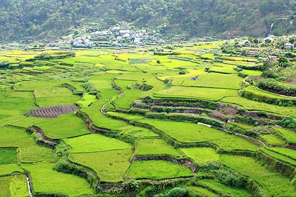 rice terraces in Suyo