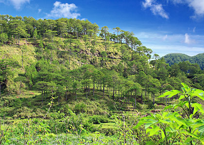 scenery on the pathway to Datil, Sagada, Mountain Province