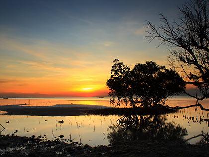 sunset among mangrove trees at Sandugan Beach, Larena, Siquijor