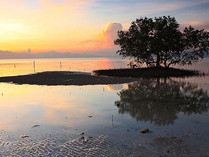 sunset by the mangroves at Sandugan Beach