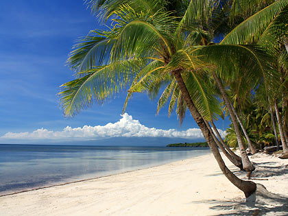 coconut palms along the beach at Coral Cay Resort, San Juan
