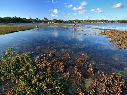 locals collecting shells at tidal pools, Tambobong Beach