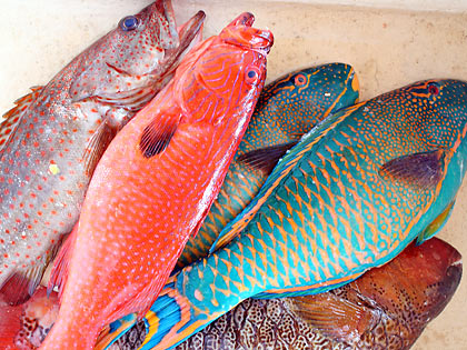 fish at a seafood market, Real, Quezon